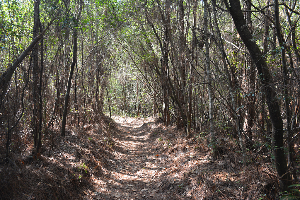 Coldwater Gardens trails