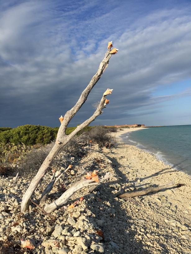 Beach walk along Garden Key (Bob Finley)