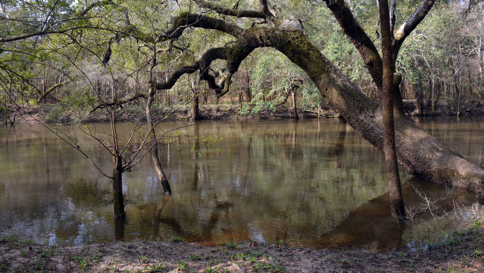 Chipola River
