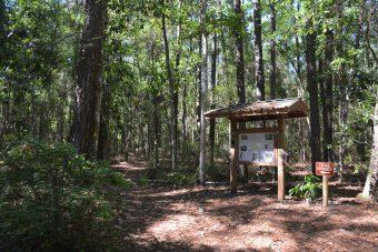 Hickory Trails