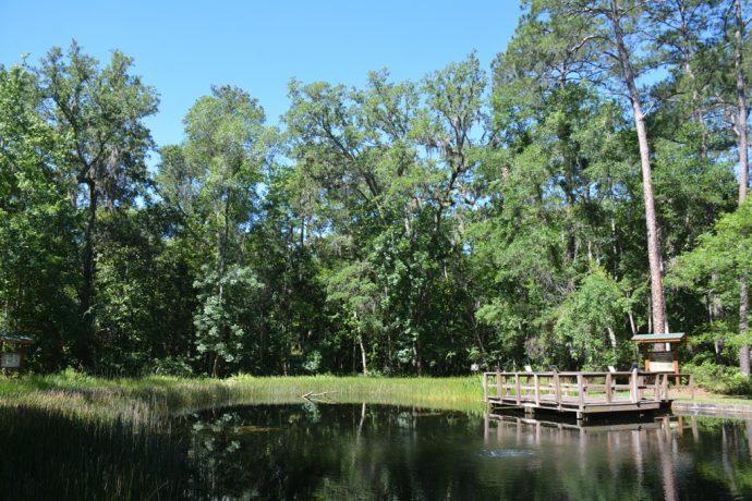 Camp Chowenwaw pond