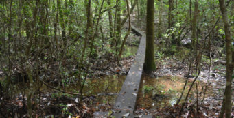 Florida Trail, Alaqua West