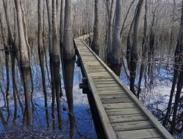 Cypress Creek boardwalk