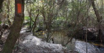 Lafayette Creek