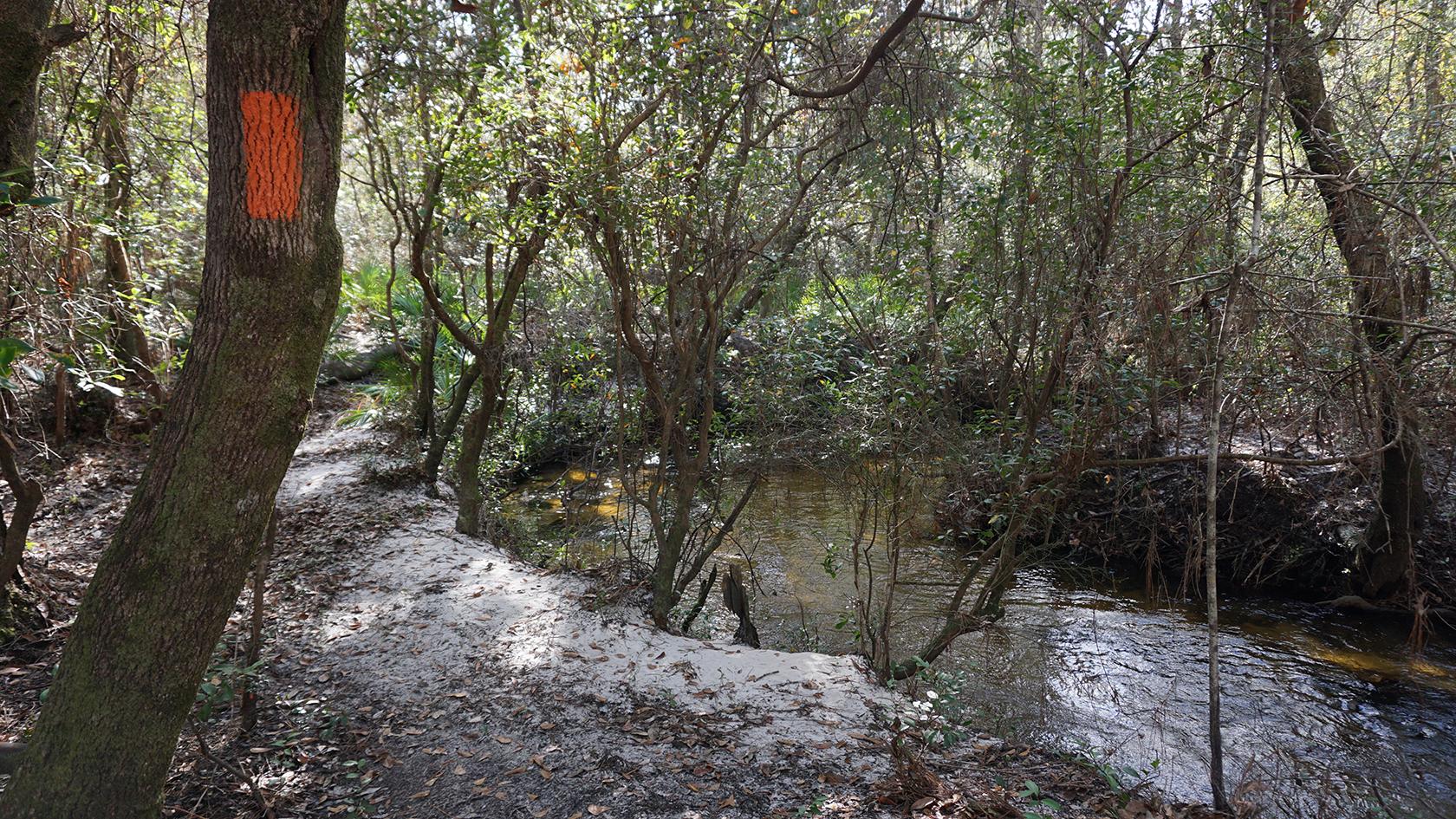 Florida Trail, Lafayette Creek