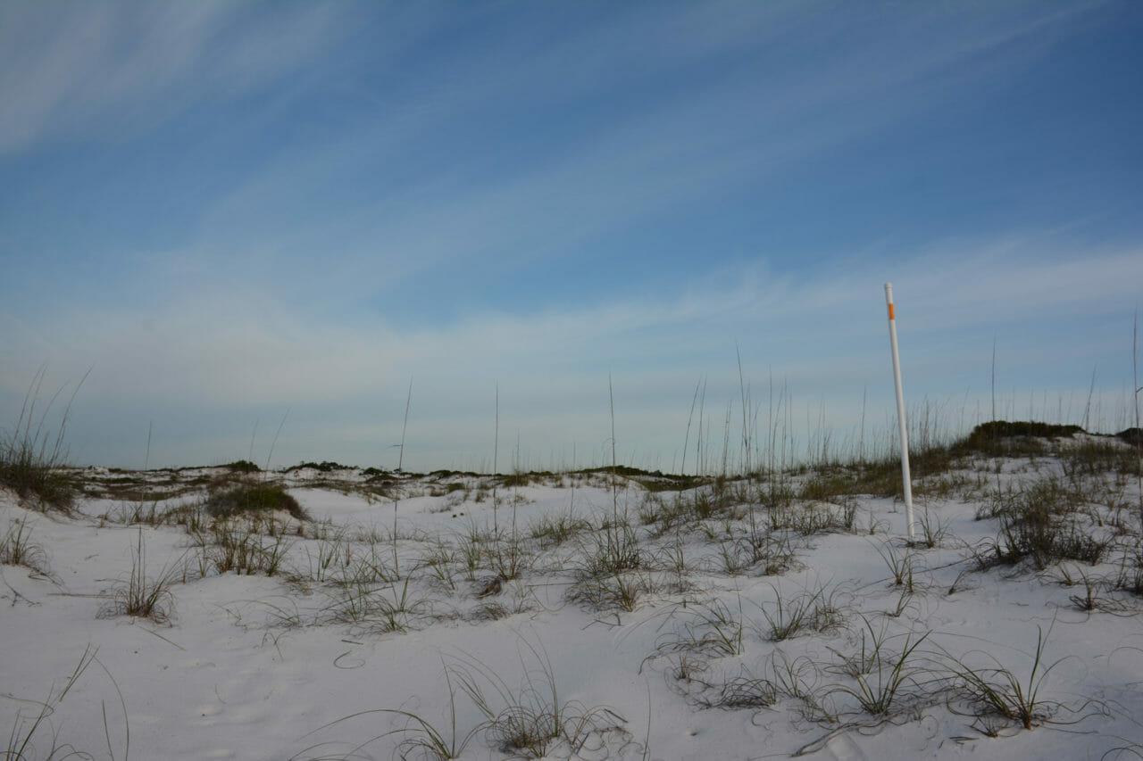 Florida Trail UWF-SRIA Dunes
