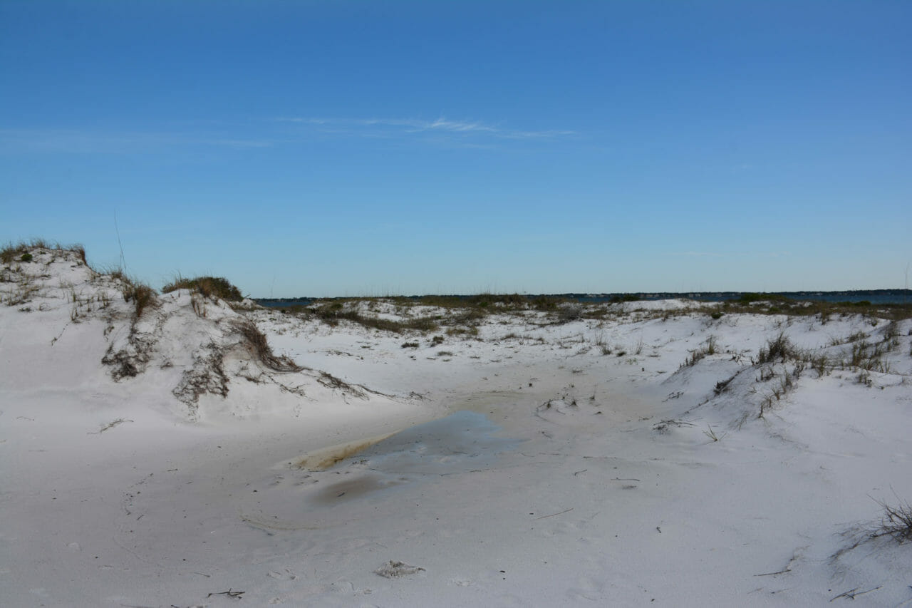 Florida Trail Seashore Dunes