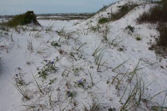 Santa Rosa Island dunes