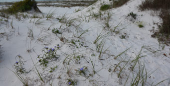 Florida Trail, UWF Dunes Preserve