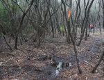 Florida Trail Yellow River