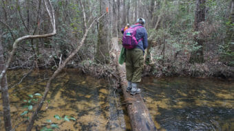 Narrow bridge Yellow River Ravines Florida Trail