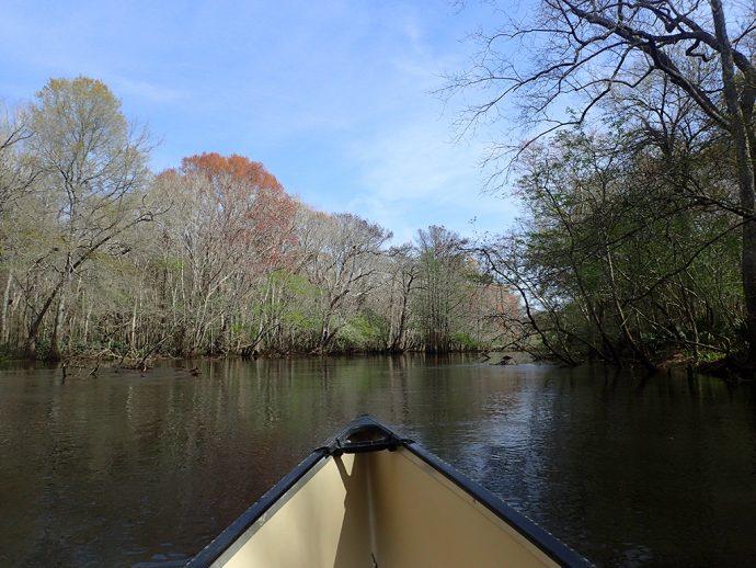 Paddling Holmes Creek