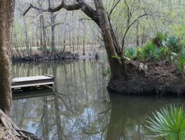 Upper Chipola River