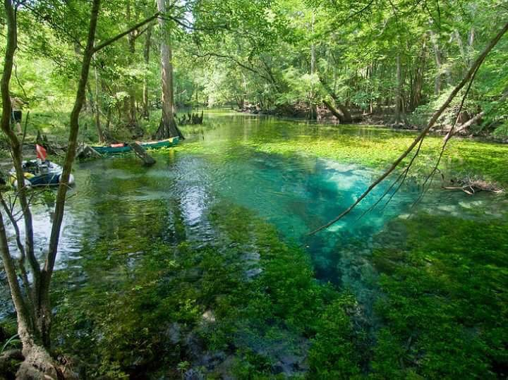 Baltzell Springs by Matthew Bull