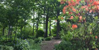 Finding Peace in a Garden