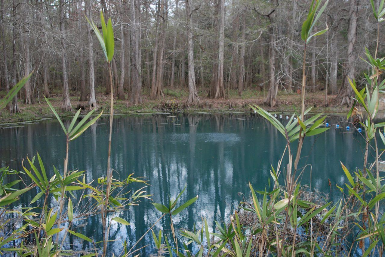 Blue Hole, Florida Caverns State Park