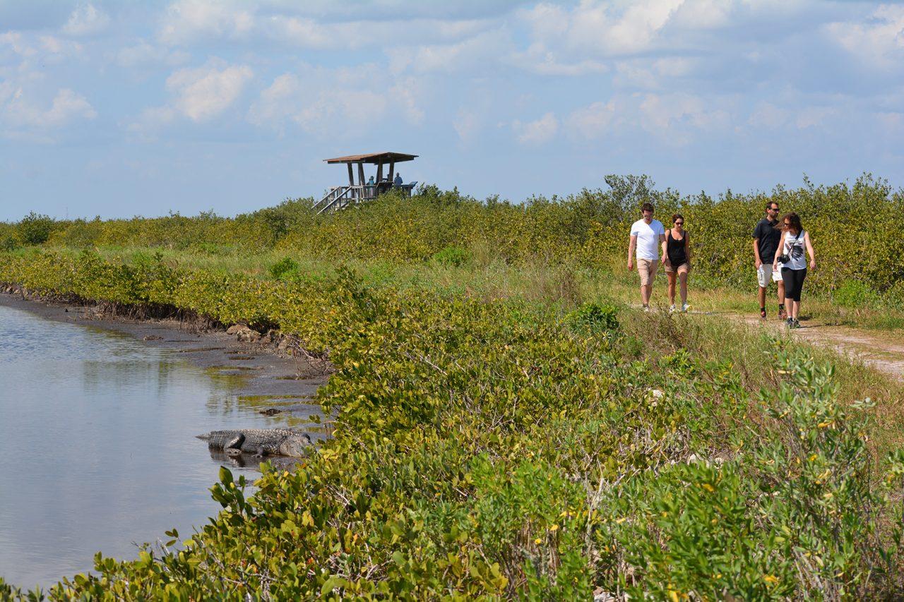 Hikers and wildlife at Merritt Island NWR