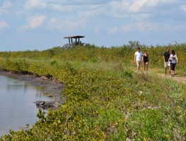 Hikers and wildlife at Merritt Island NWR