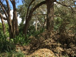 Hurricane damage to Florida parks