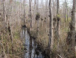 Big Cypress flooding