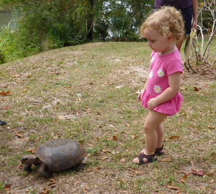 Girl with gopher tortoise  (Lori Ceier/waltonoutdoors.com)