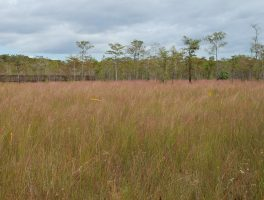 Big Cypress reopens campgrounds