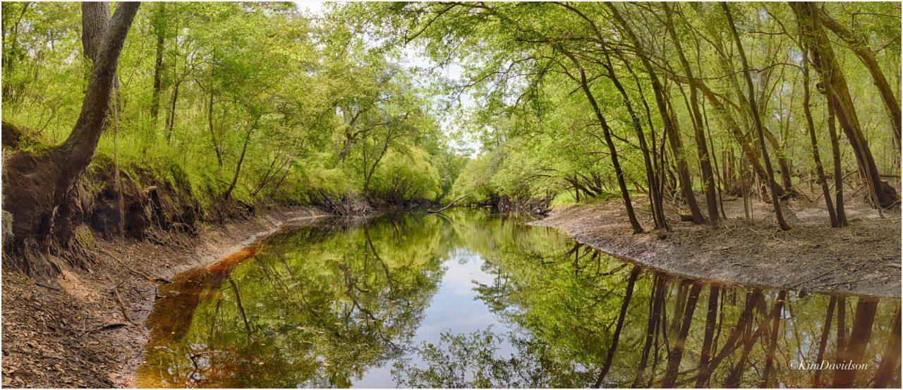 Santa Fe River Preserve (Tom Kay)