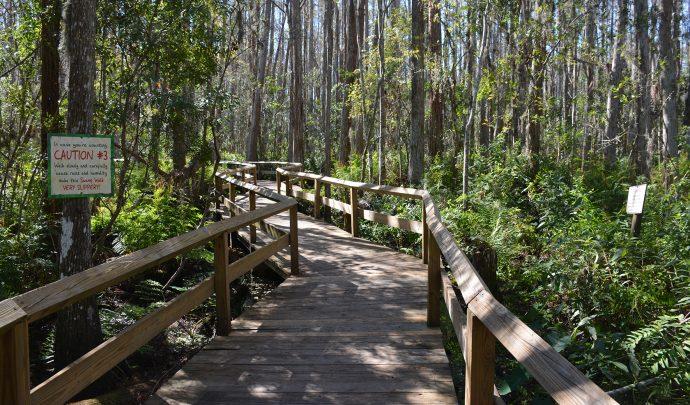Along the Swamp Walk