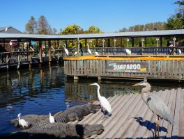 Gatorland Jumparoo Pond