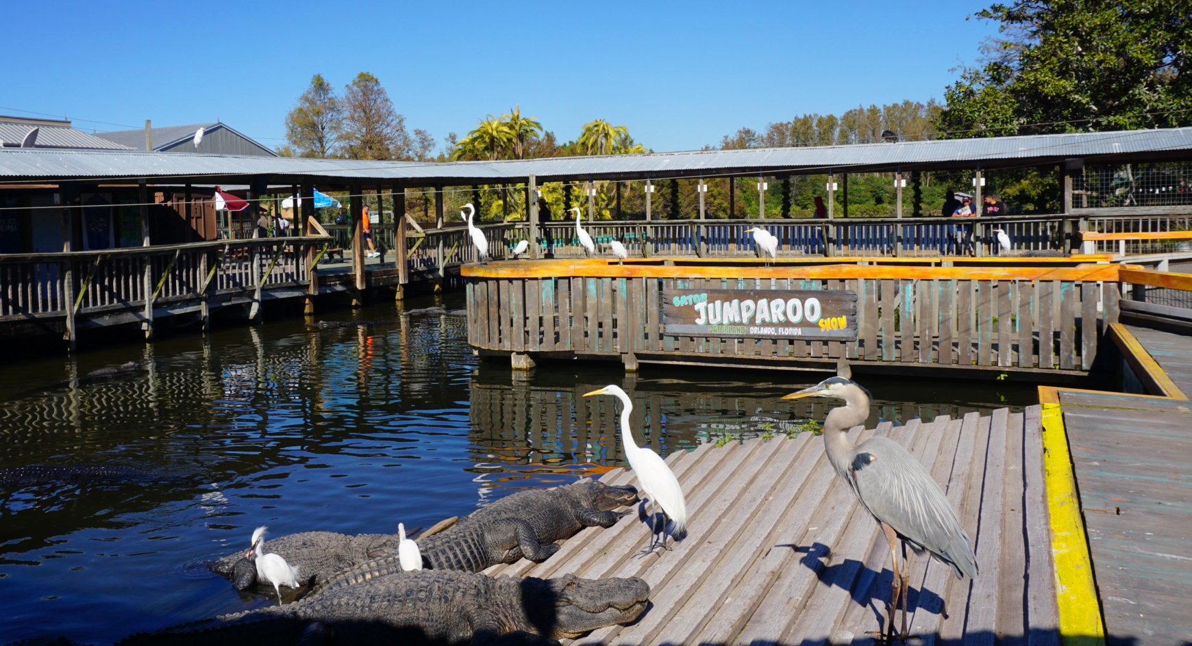 Gatorland Jumparoo Pond