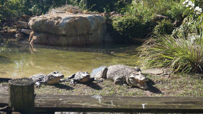 Crocs up close