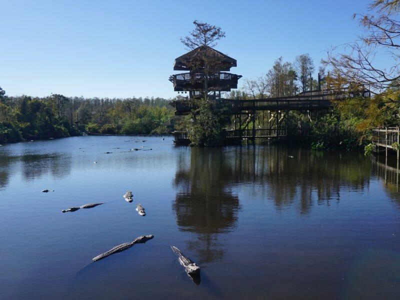 Gatorland breeding pond