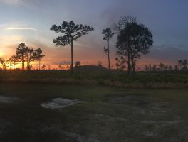 Florida Trail, Prairie Lakes Loop