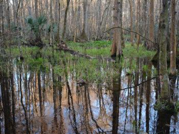 Marshall Swamp