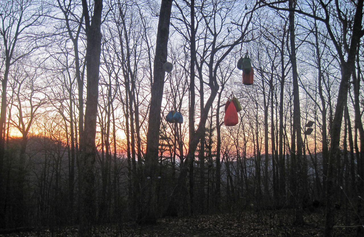 Bear bags hanging at sunset on the AT in Georgia