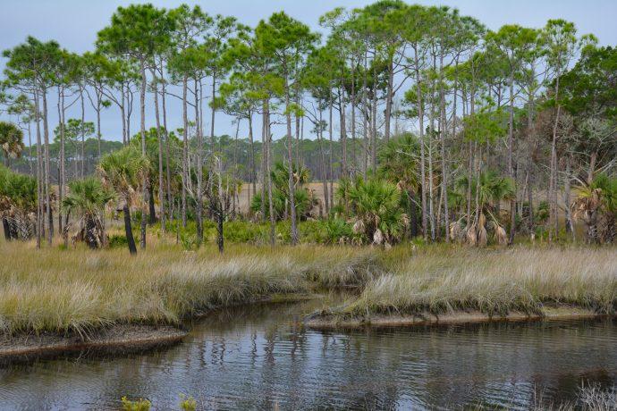 Coastal pine flatwoods, St. Marks NWR