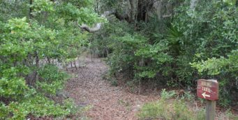 Holly Hammock Hiking Trail
