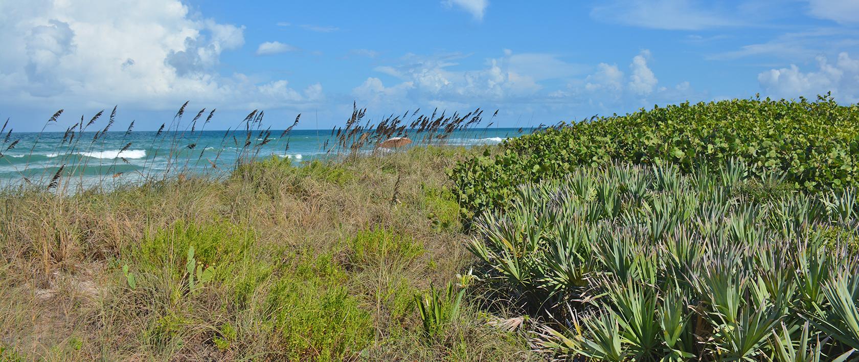 Playalinda Beach