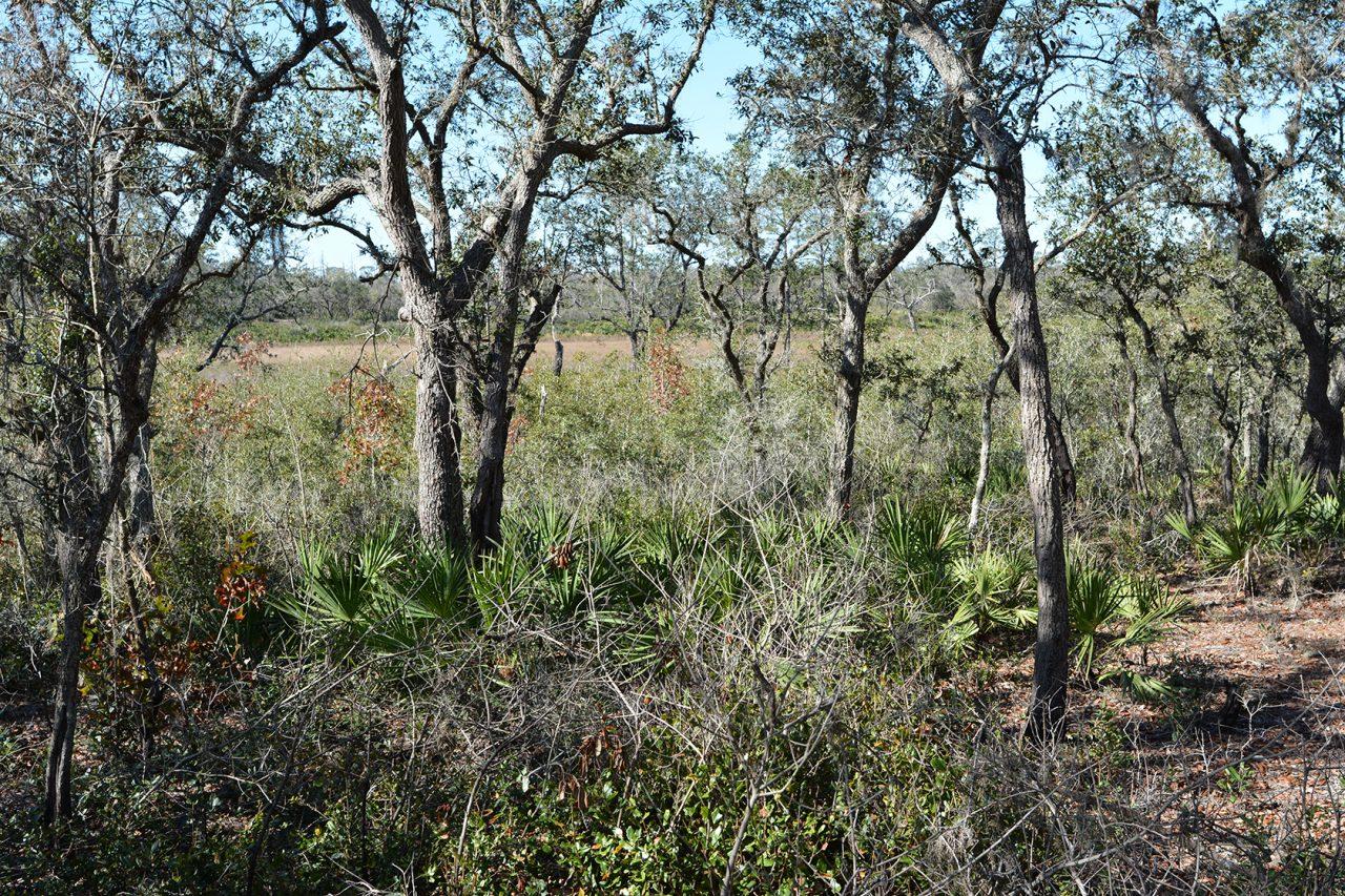 Prairie at Tiger Creek Preserve