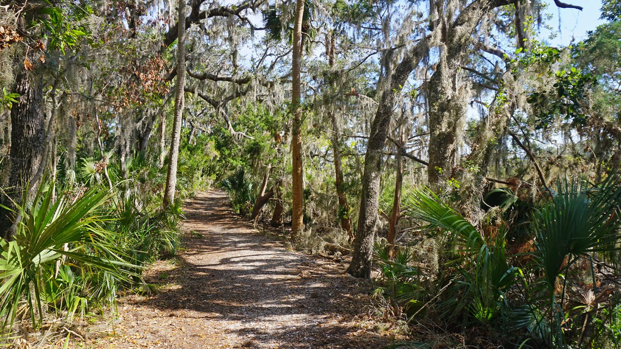 Hiking at Timucuan Preserve