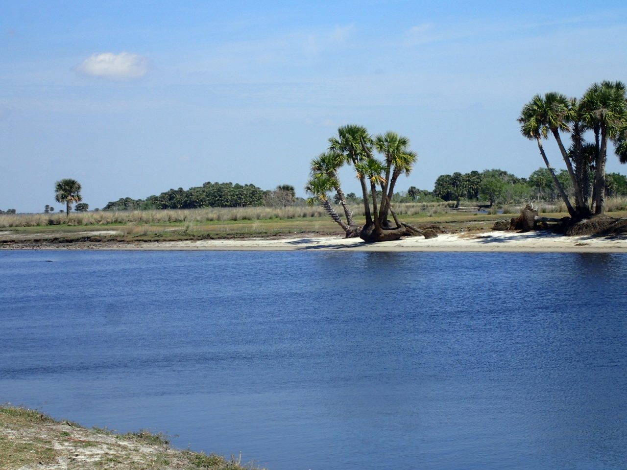 Along the St. Johns River in Tosohatchee