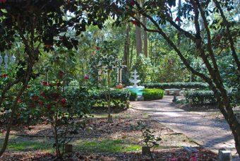 Camellia Garden, Dorothy B. Oven Park