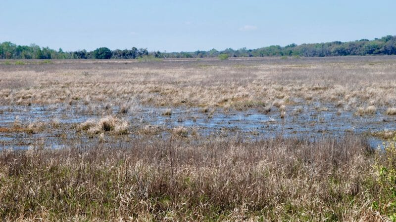 Levy Prairie at Barr Hammock Preserve