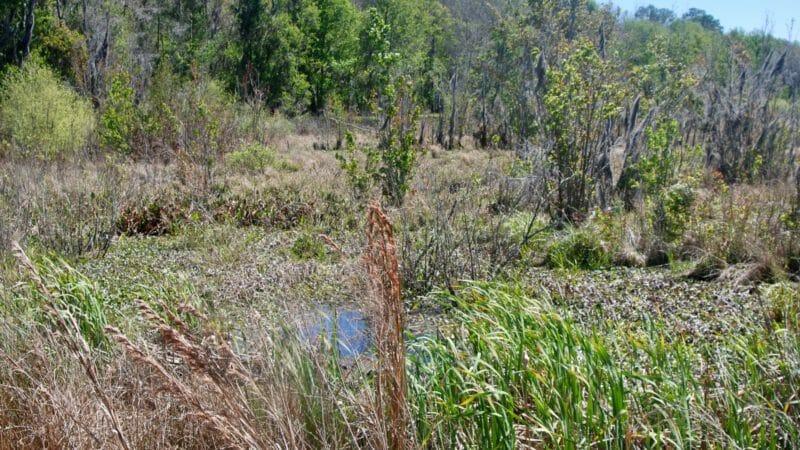 Marshes at Barr Hammock Preserve