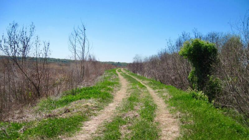 North Levee Barr Hammock Preserve