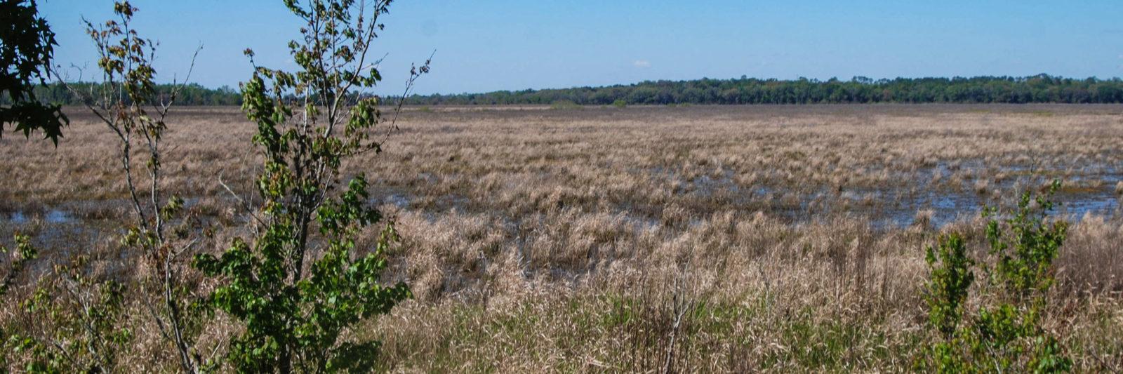South Levee Barr Hammock Preserve