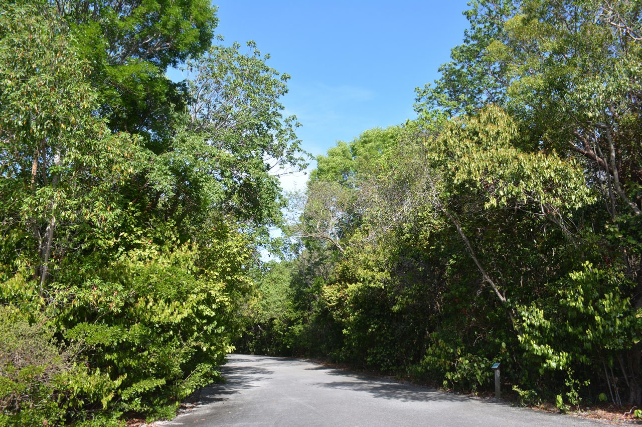 Port Bougainvillea Trail, Key Largo Hammock