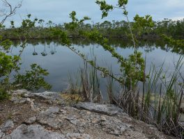 Blue Hole at National Key Deer Refuge