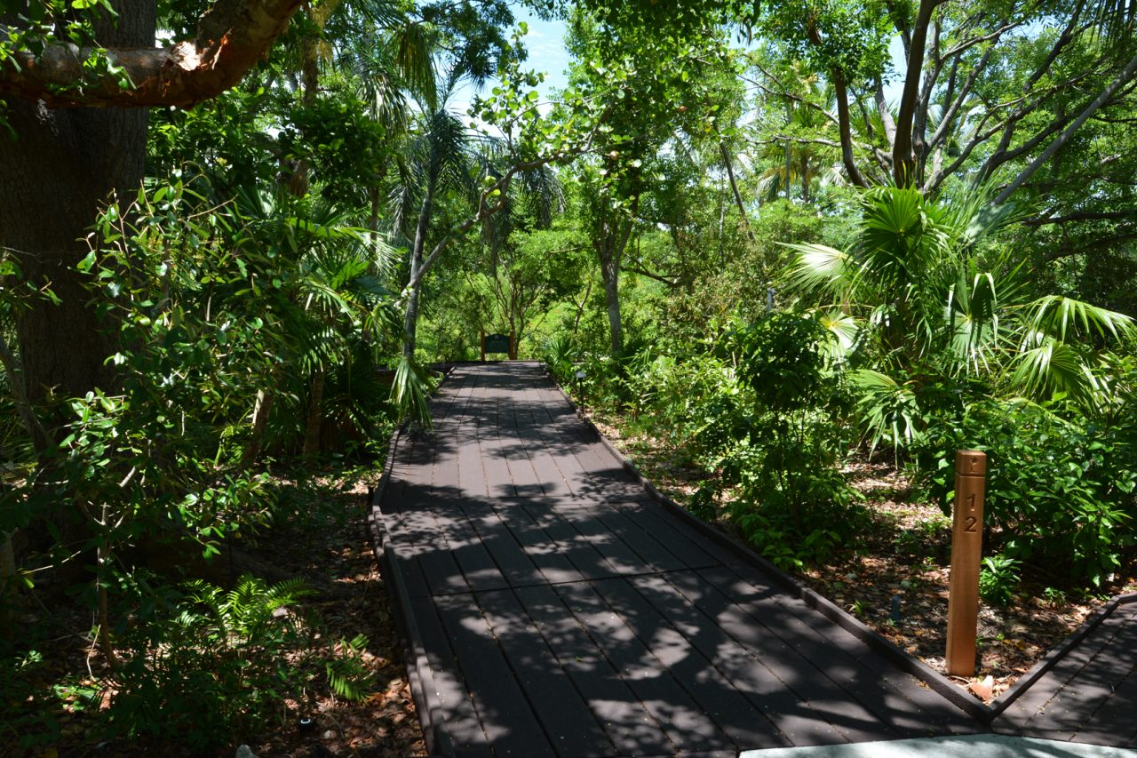 Key West Tropical Forest