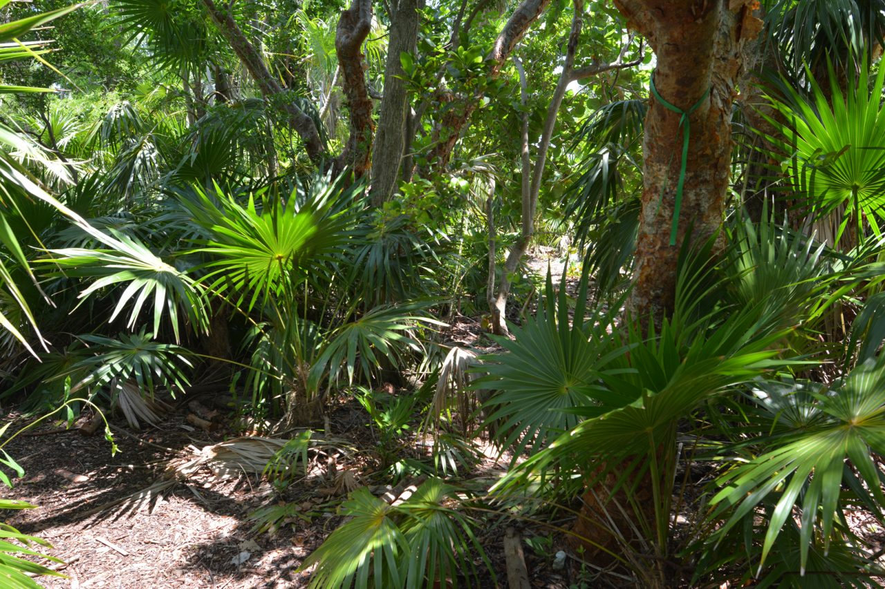 Key West Tropical Forest & Botanical Garden